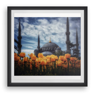 Tulips with Sultanahmet