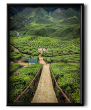 Load image into Gallery viewer, A Valley of Tea