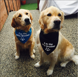 I'm the Little Brother Bandana - FunDogBandanas
