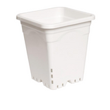 Active Aqua - Square White Pot Tall