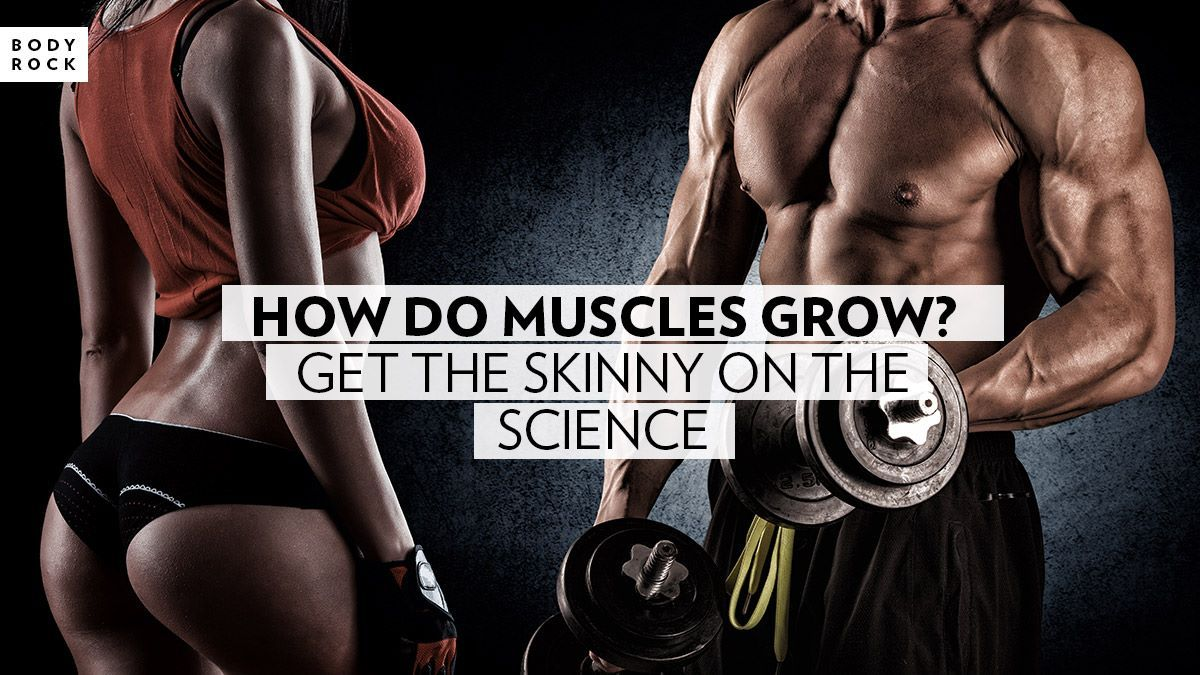 Image of Bodyrock blog article - How Do Muscles Grow? Get The Skinny On The Science