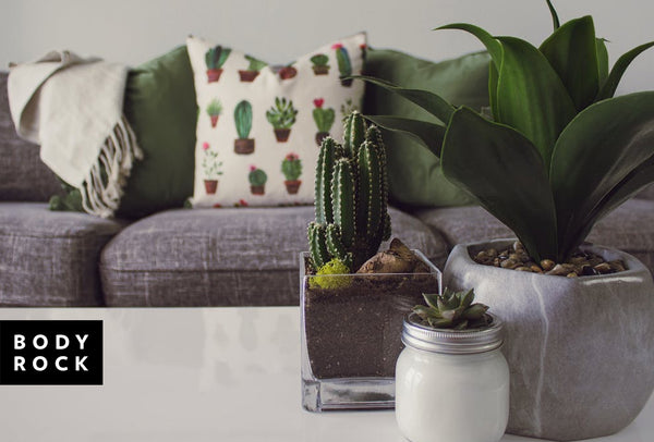 Go Green: The Best Indoor Plants for Energy