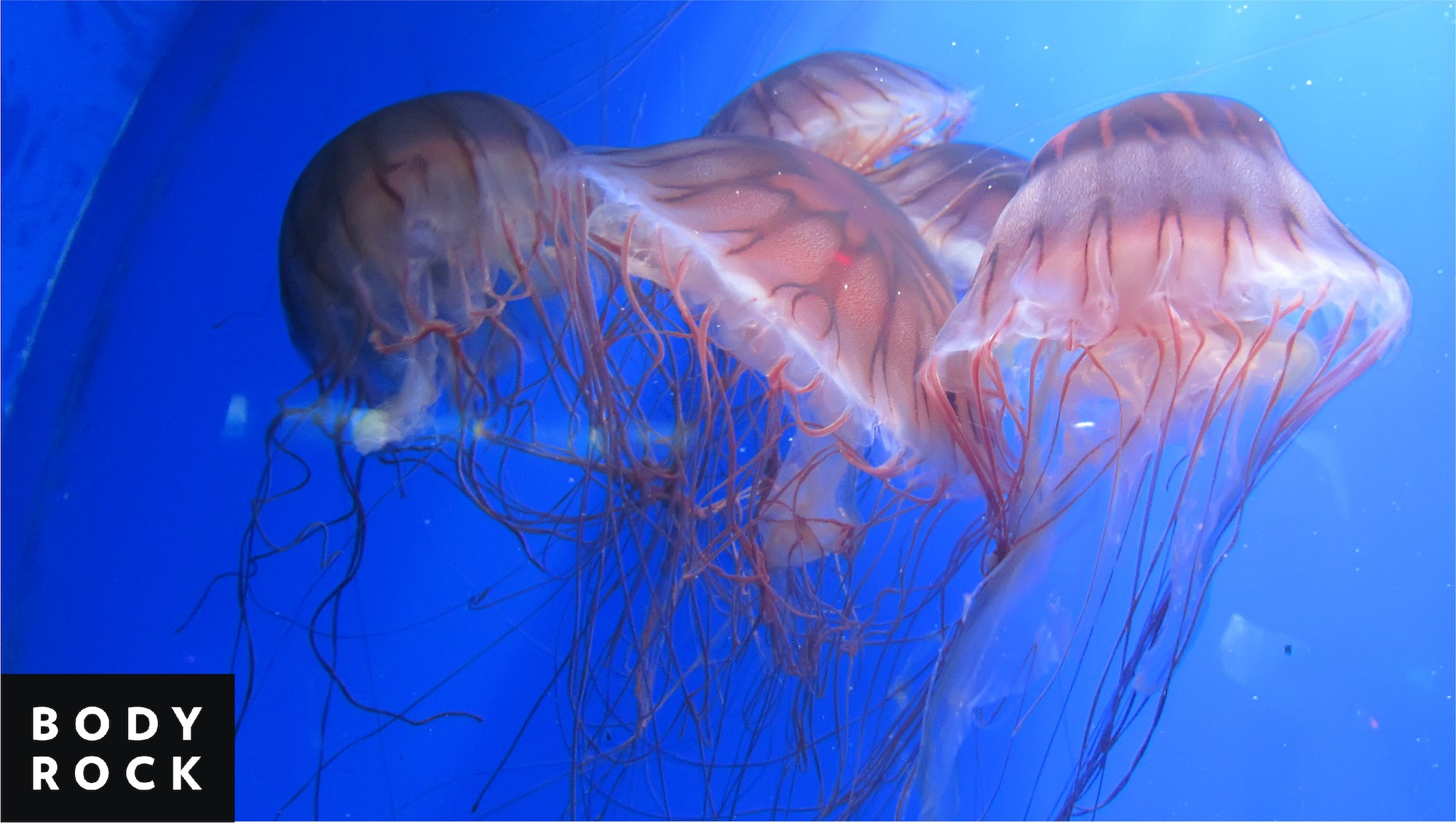 Are Jellyfish The Next Big Thing In Healthy Eating?