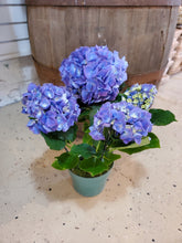 Load image into Gallery viewer, Floral Hydrangea