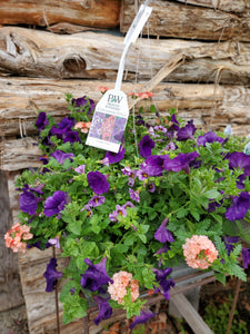 "12"" Annual Hanging Baskets"
