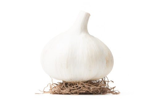 Garlic German White Bulb