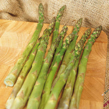 Load image into Gallery viewer, Asparagus, bare root - Mary Washington