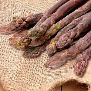 Asparagus, Purple Passion 9pp