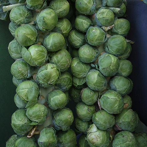 Brussels Sprouts 4 pack