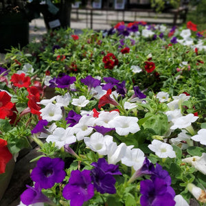 "Premium 12"" Annual Planters - Red, White & Blue"