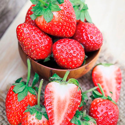 Strawberry 'Albion' bareroot 10/pk