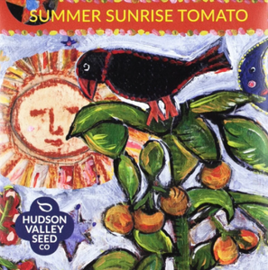 Tomato, Summer Sunrise