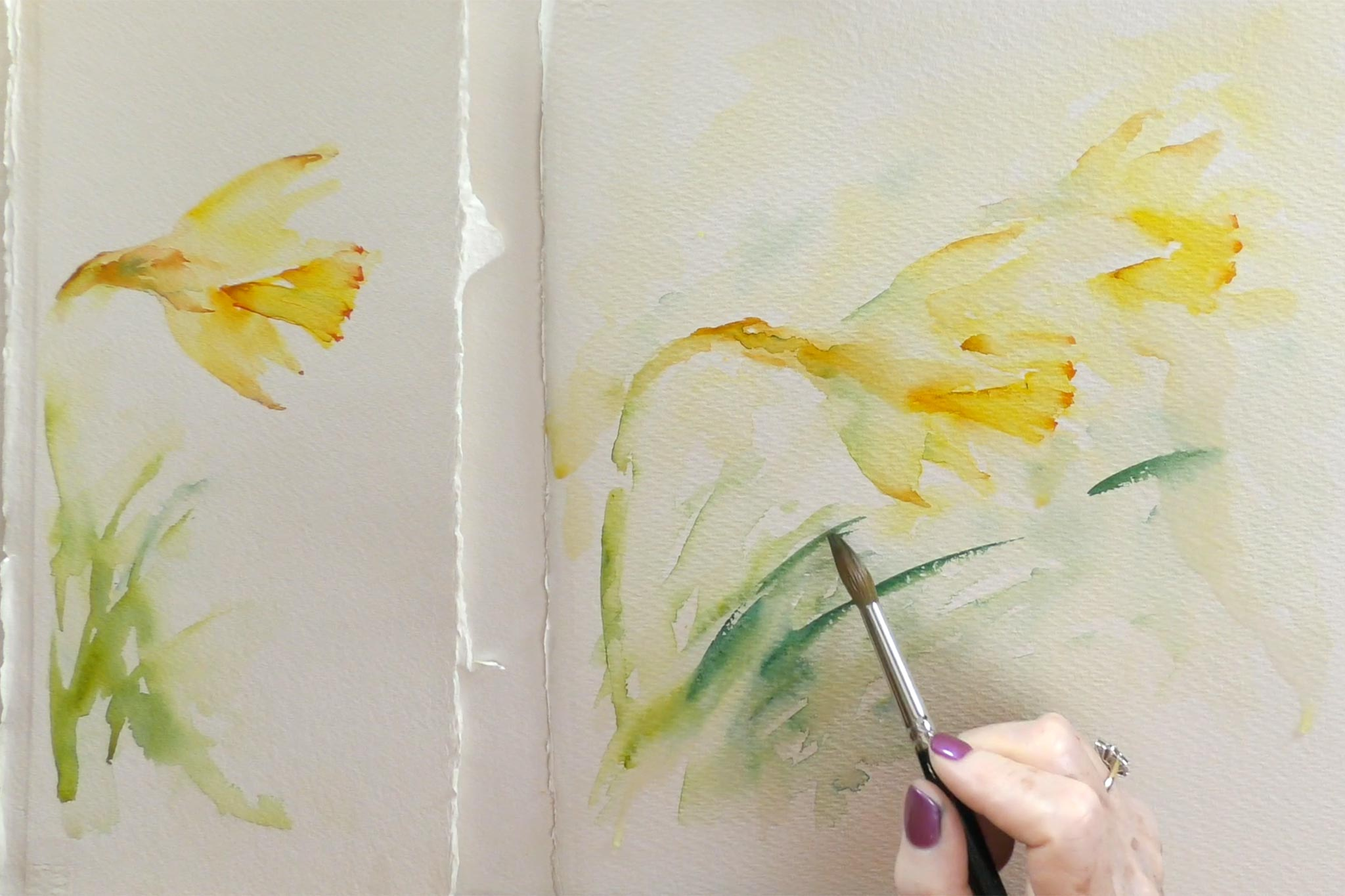 Simple Study : Daffodil