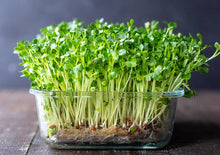 Load image into Gallery viewer, Microgreens Kit