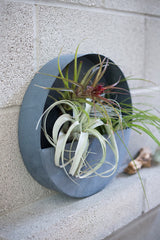 Circle Wall Planter|www.BowlandPitcher.com