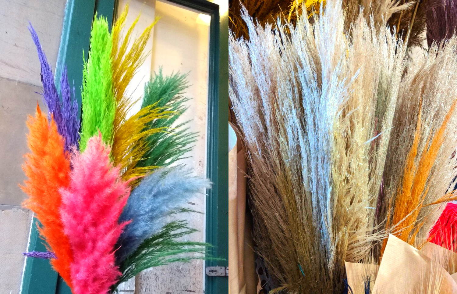 Colourful Pampas Grass and Natural Dried Pampas Grass