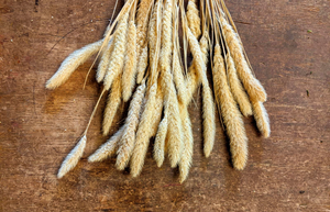 Natural Foxtail Grass