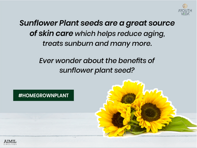 Sunflower- a gem in skin care