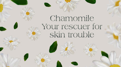 Chamomile- Your rescuer for Skin troubles