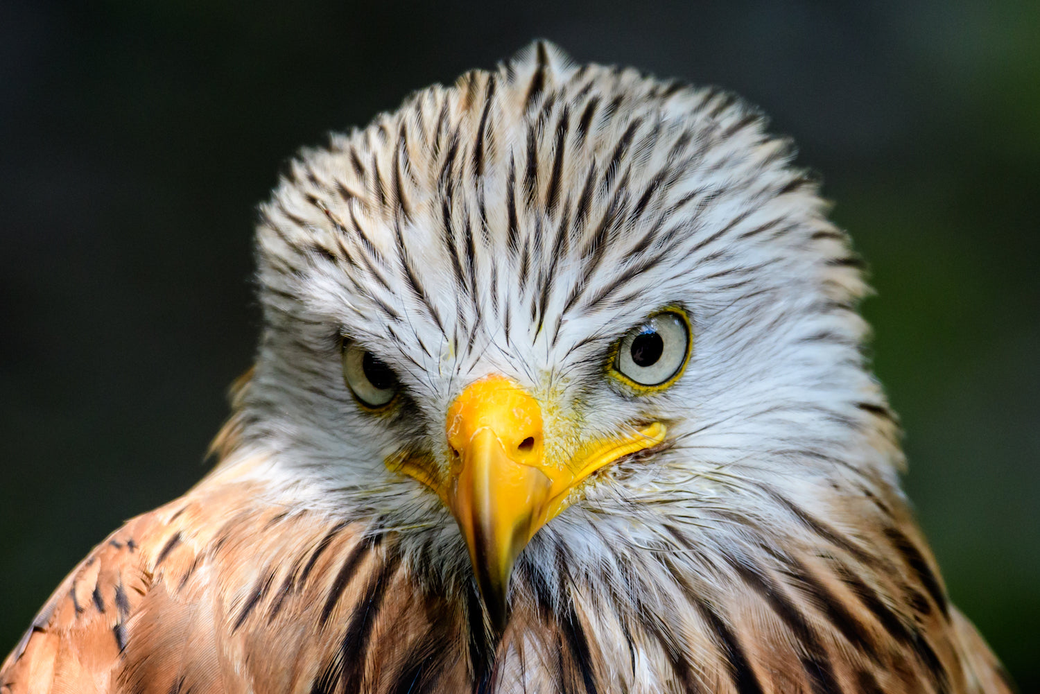Photographic Training On Location - Huxley's Birds of Prey - Capturing Action