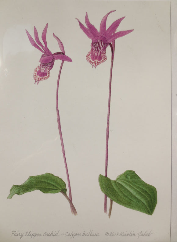 Fairy Slipper Orchid Notecard by Kristin Jakob
