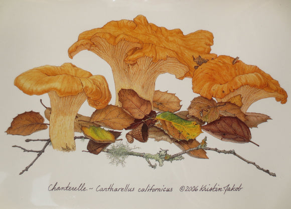 Chanterelles Notecard by Kristin Jakob