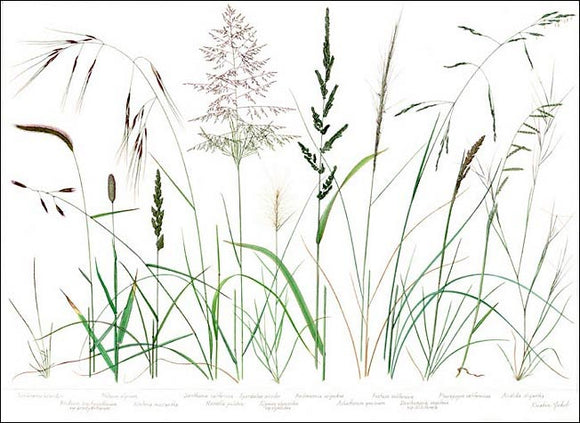 Native Grasses Placemats