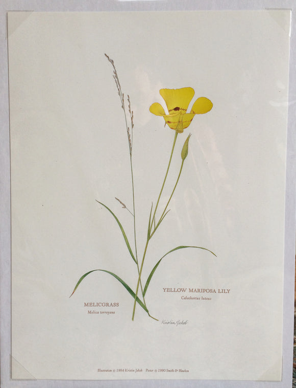Botanical Print - Mariposa Lilly