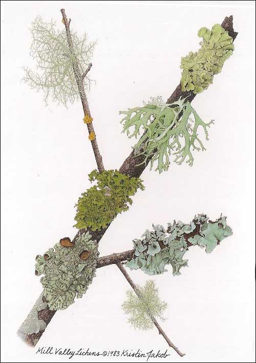 Mill Valley lichen Notecard by Kristin Jakob