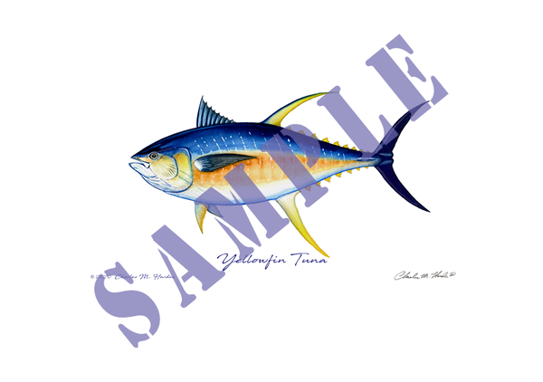 Yellowfin Tuna Art Print