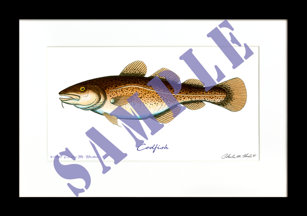 Codfish Art Print