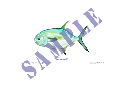 Permit Fish Art Print