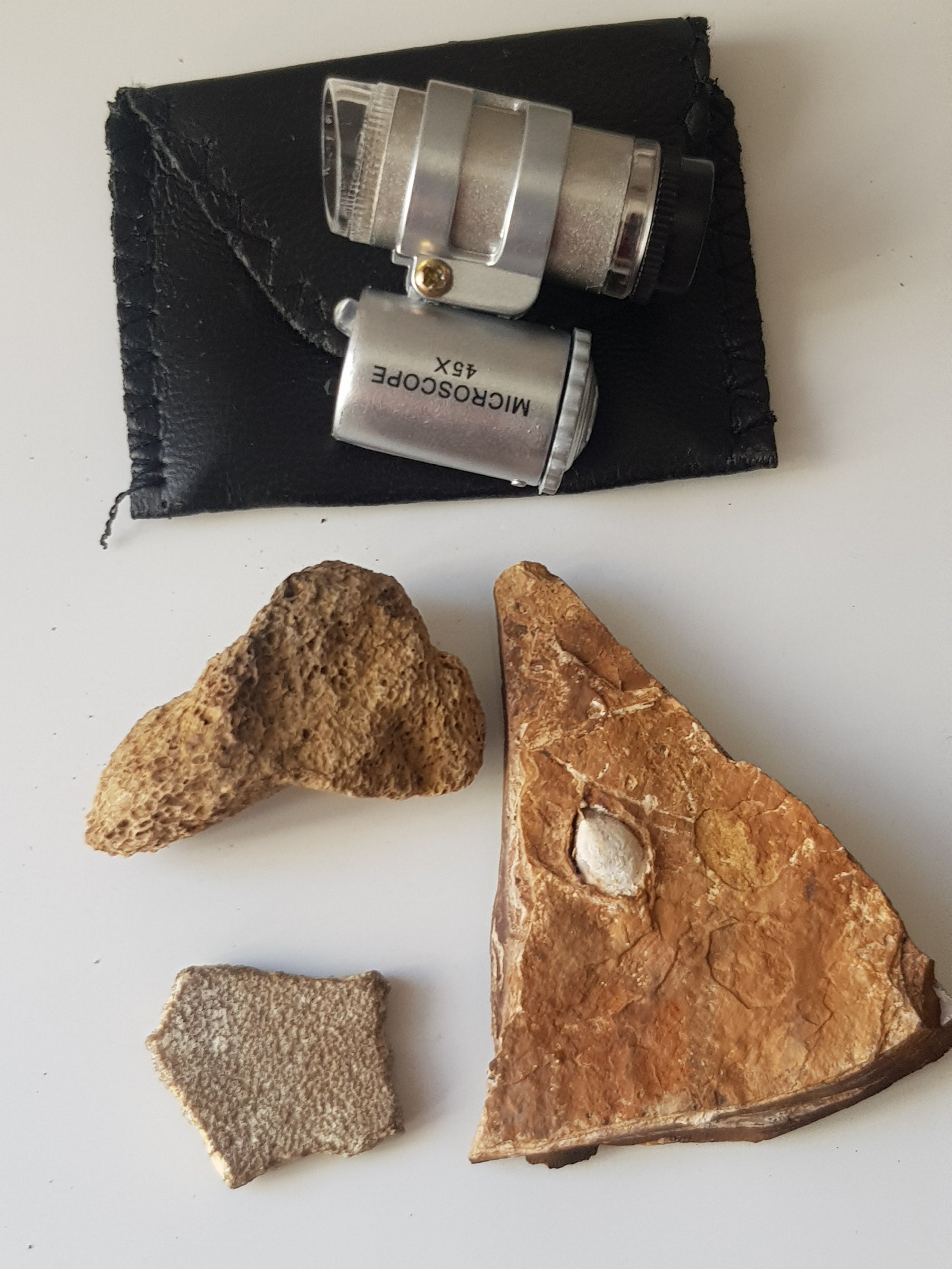 Fossil starter kit + microscope (land) - The Science of Magic