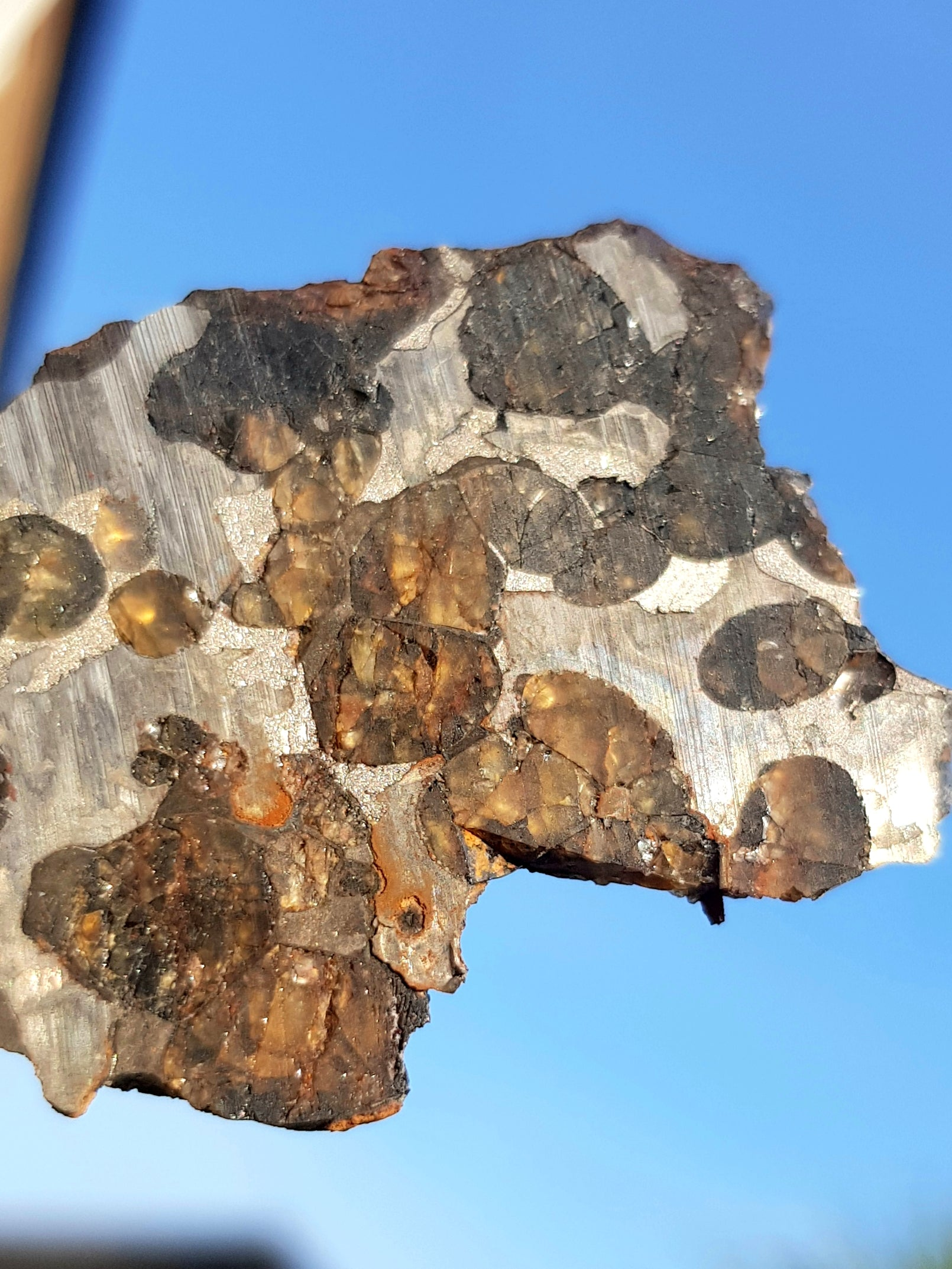 A slice of brenham ( a pallasite) held up to the light. This sample consists o crystals of orange/brown olivine within an iron nickel matrix.
