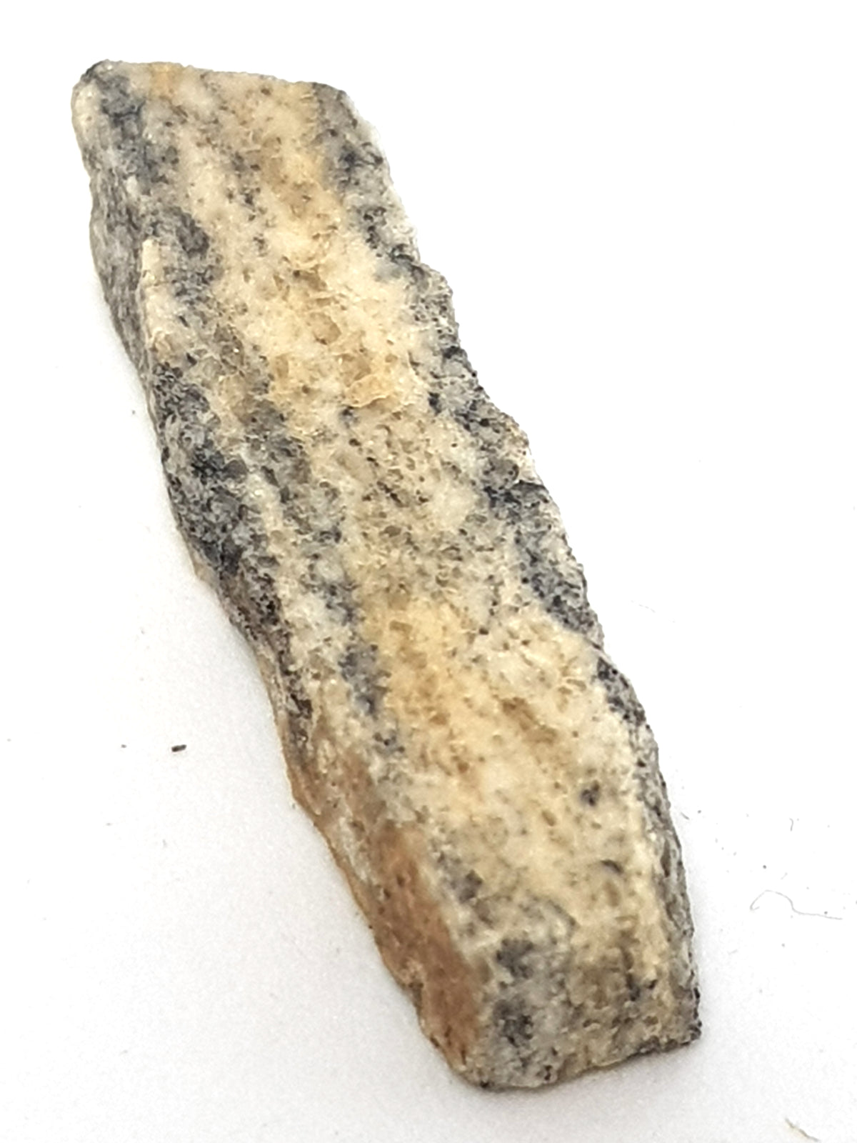 A thin slice of Acasta Gneiss. It is leucocratic with thin black bands
