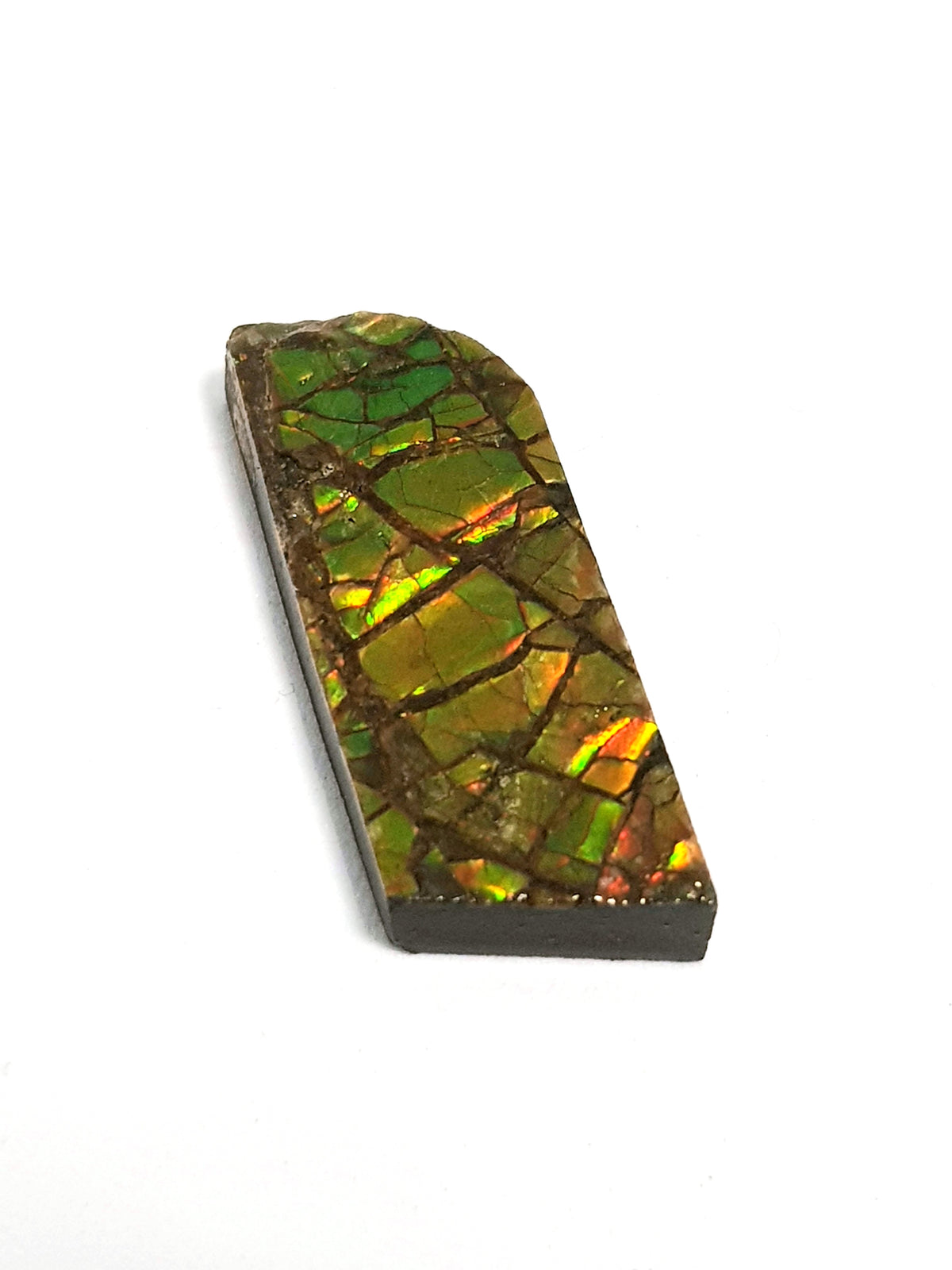 Ammolite - The Science of Magic