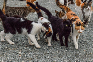 Aoshima, The Japanese 'Cat Island'