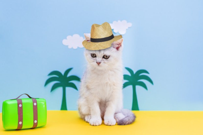 Is it ok to take my cat with me on vacation?
