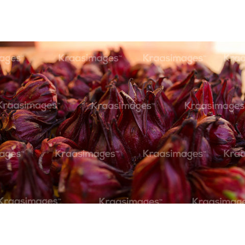 Close up of sorrel buds stock photo