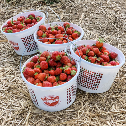 Strawberry Buckets