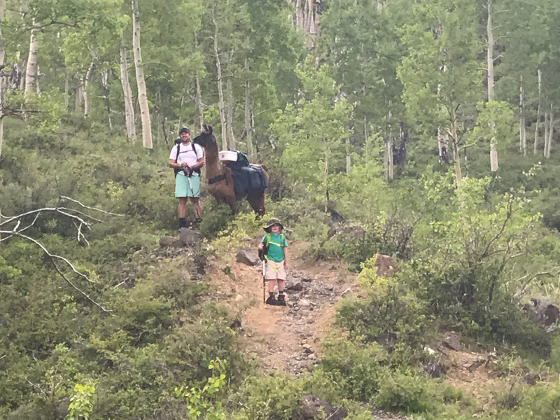 llama hiking with kids