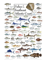 FISHES OF THE SOUTHEAST ATLANTIC COAST PUZZLE
