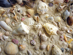 SHE SELLS SEASHELLS PUZZLE