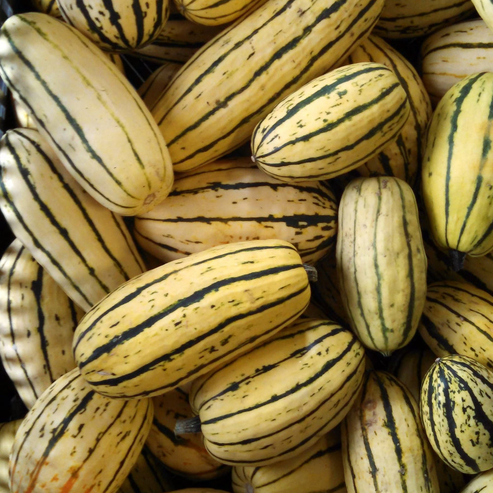 "Load image into Gallery viewer, Small Delicata or ""Sweet Potato Squash"", 1 lb"