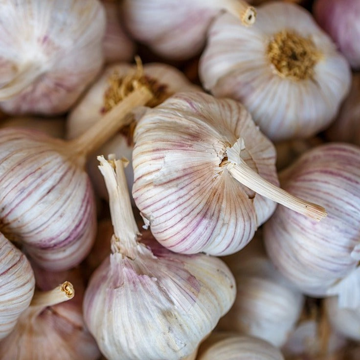 Organic Garlic Bulbs, 1 head