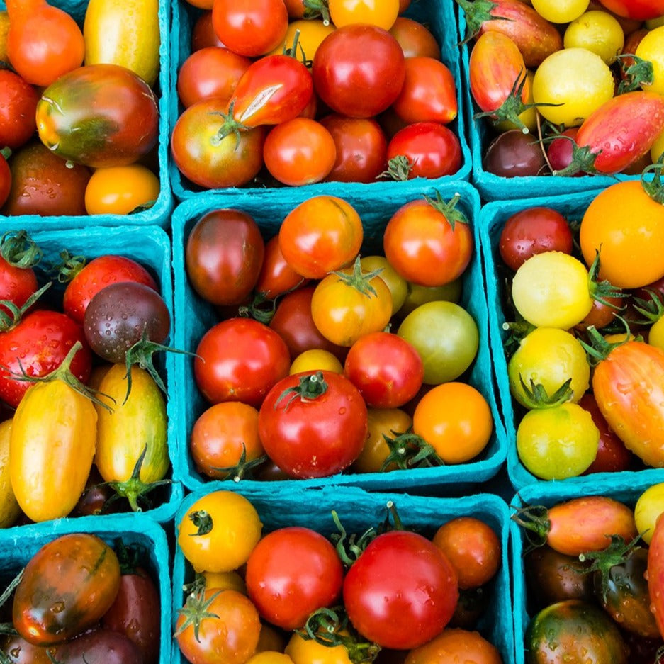 Organic Mixed Medley Heirloom Cherry Tomatoes, 1 pint