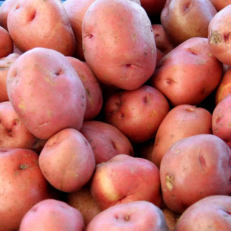 Load image into Gallery viewer, Red Potatoes, 3lbs