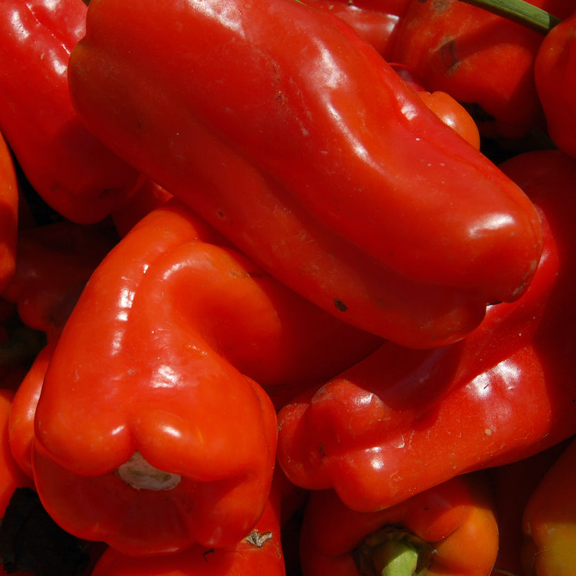 Red Cubanelle Sweet Peppers, 4 pack