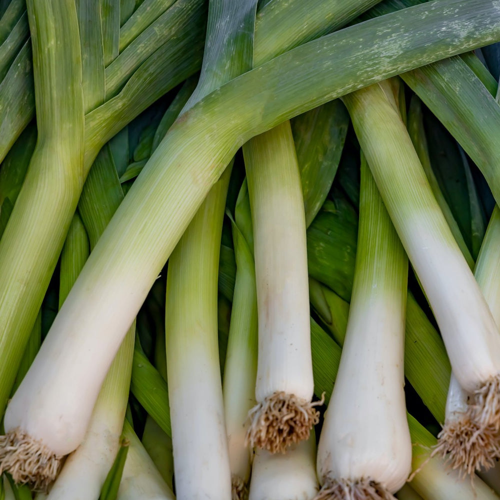 Load image into Gallery viewer, Leeks, 3 pack