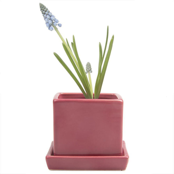 Cube & Saucer Ceramic Plant Pot  (Raspberry)